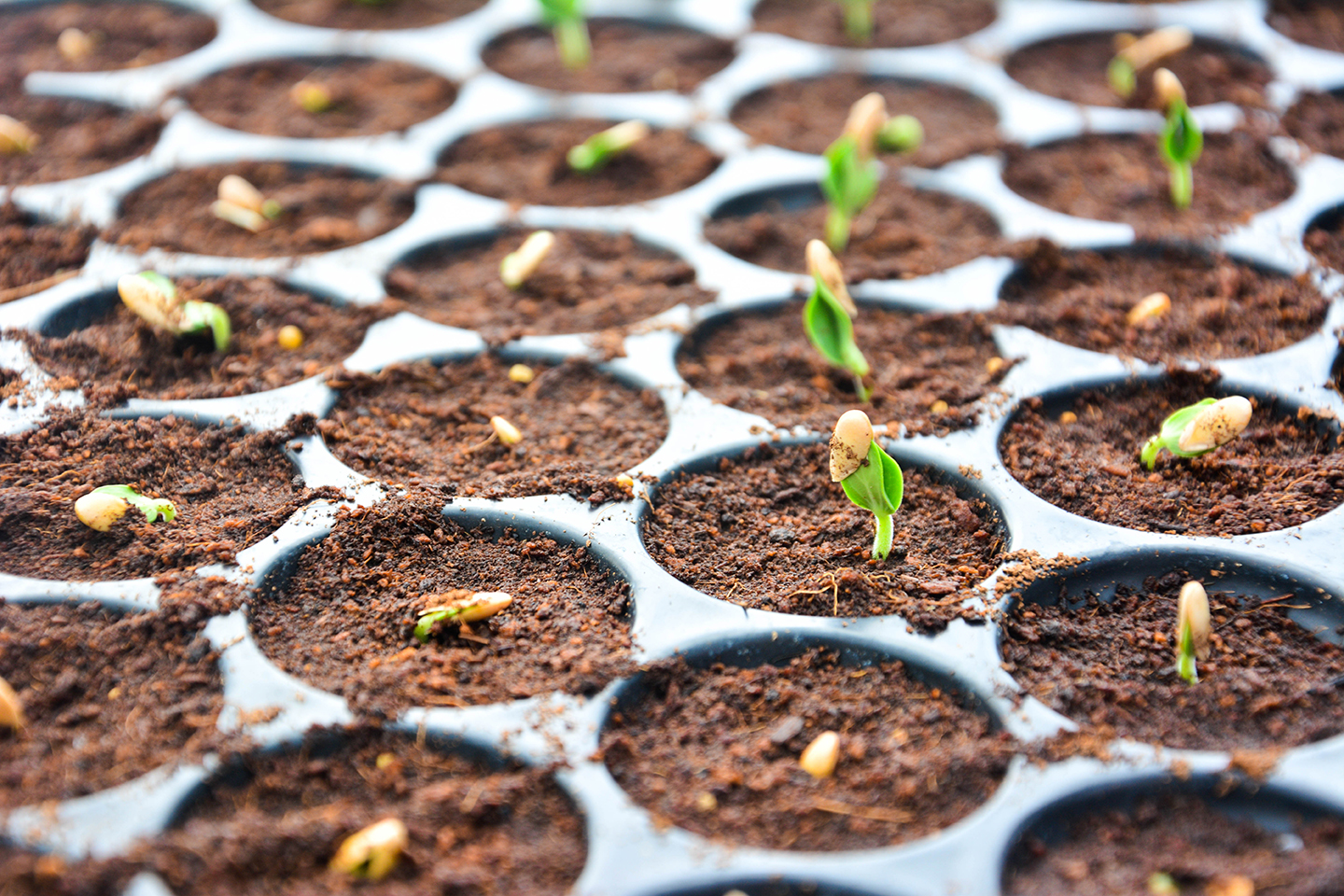 Seedling Plants in Containers