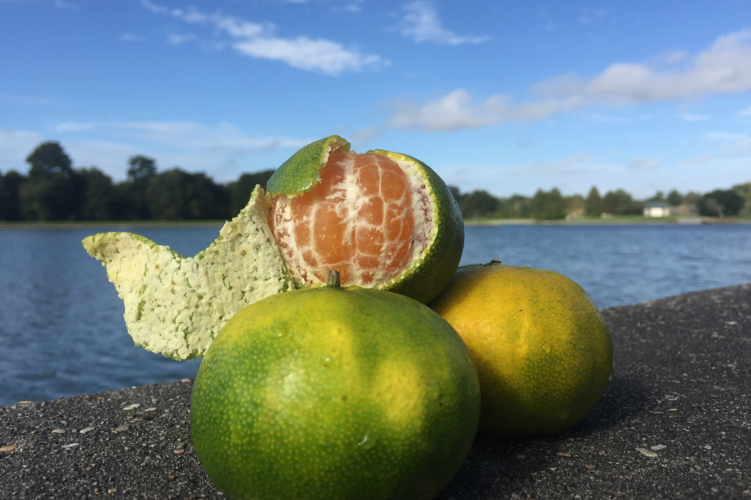 Great Louisiana Satsuma Peel 2018