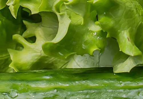 Tossed Romaine Salad with Cucumbers Photo